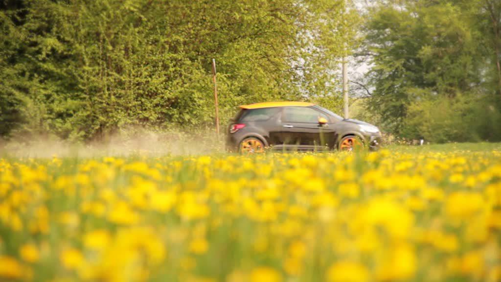 Auto vor Blumenwiese